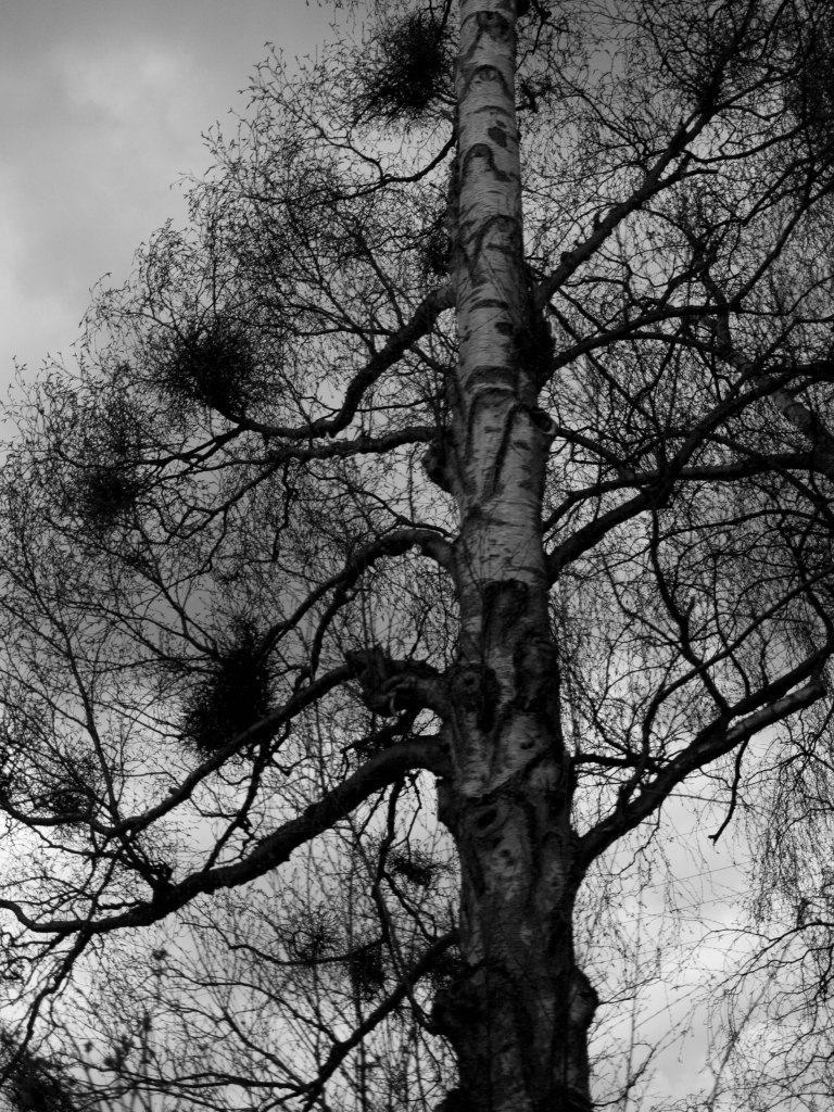 Crows nest tree